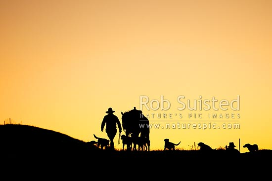 Stockmen horses and dogs heading out from Bush Gully at day break to muster cattle into yards. Silhouette, Molesworth Station, Marlborough District, Marlborough Region, New Zealand (NZ) stock photo.