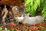 Cat killing a wild rabbit