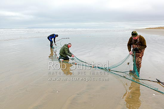 Flounder fishermen clearing their catch from a drag net, fishing with flounder net on Oreti Beach, Invercargill, Southland District, Southland Region, New Zealand (NZ) stock photo.