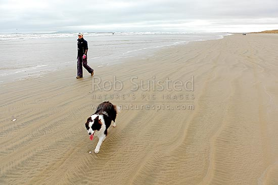 Woman and border collie dog exercising on beach in winter, Oreti Beach, Southland District, Southland Region, New Zealand (NZ) stock photo.