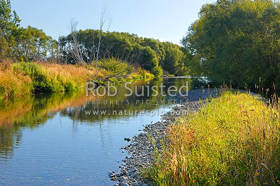 Summertime river with long grass, seed heads, blue sky, reflections, willow trees and golden colours. Whitestone River, Te Anau, Southland District, Southland Region, New Zealand (NZ) stock photo.