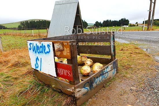 Swedes. Selling swede vegetables on the side of a rural road with honesty box, Clinton, Clutha District, Otago Region, New Zealand (NZ) stock photo.