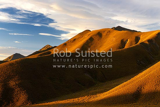 Lindis Pass rolling high country hills covered with tussock, at sunset. Southern side of pass, Lindis Pass, Central Otago District, Otago Region, New Zealand (NZ) stock photo.