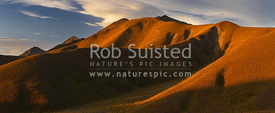 Lindis Pass rolling high country hills covered with tussock, at sunset. Southern side of pass. Panorama in evening light, Lindis Pass, Central Otago District, Otago Region, New Zealand (NZ) stock photo.