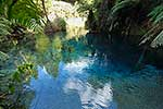 Blue Springs beside the Waihou River