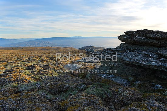 The Old Man Range / Kopuwai Scenic Reserve, with alpine rock tors and cushion plant vegetation, Alexandra, Central Otago District, Otago Region, New Zealand (NZ) stock photo.