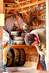 Stockmen shoeing horses
