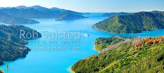 Queen Charlotte Sound. Bluebridge Cook Strait ferry entering Tory Channel near Ruaomoko Point. Above Maraetai Bay. Motuara Island distant. Panorama, Marlborough Sounds, Marlborough District, Marlborough Region, New Zealand (NZ) stock photo.