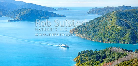 Queen Charlotte Sound. Bluebridge Cook Strait ferry entering Tory Channel near Ruaomoko Point. Motuara Island distant. Panorama, Marlborough Sounds, Marlborough District, Marlborough Region, New Zealand (NZ) stock photo.