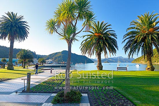 Picton foreshore, gardens and palm trees on a calm evening, with yachts moored in the bay, Picton, Marlborough Sounds, Marlborough District, Marlborough Region, New Zealand (NZ) stock photo.