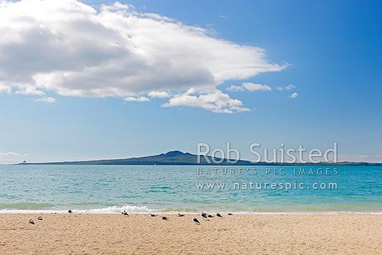 Mission Bay Beach, Rangitoto Island and Motukorea Channel with seagulls on beach, Mission Bay Beach, Auckland City District, Auckland Region, New Zealand (NZ) stock photo.