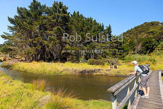 The Hillary Trail and Te Henga walkway and walker crossing the Waitakere River. Couple enjoying a picnic on the banks, Bethells Beach, West Auckland, Waitakere City District, Auckland Region, New Zealand (NZ) stock photo.