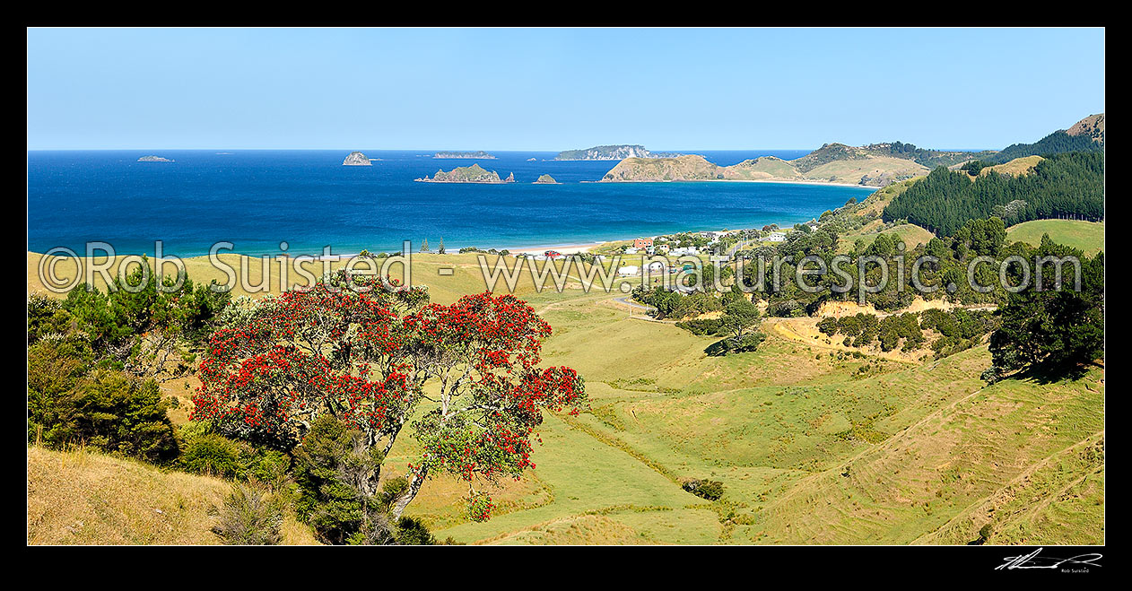 Image of Opito Bay settlement with Rabbit, Ohinau, Ohinauiti, Old Man Rock and Black Rock Islands centre. Flowering Pohutukawa tree. Panorama, Opito Bay, Thames-Coromandel District, Waikato Region, New Zealand (NZ) stock photo image
