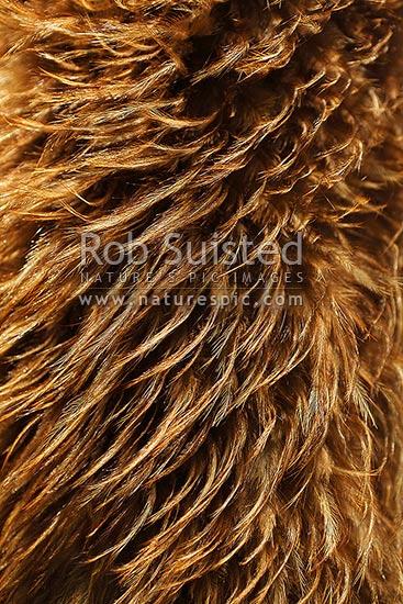 brown kiwi bird feathers woven in traditional maori cloak