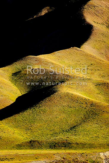 Farmland rolling hills and ridgeline in late evening summer sun showing texture and form, Molesworth Station, Marlborough District, Marlborough Region, New Zealand (NZ) stock photo.