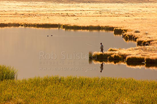 Lake Sedgemere with trout flyfisherman approaching waters edge to cast, on beautiful golden morning, Molesworth Station, Marlborough District, Marlborough Region, New Zealand (NZ) stock photo.