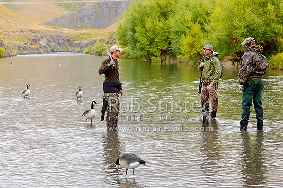 Marcus Girvan (left) and friends setting Canada goose decoys on the Acheron River during the Molesworth Goose hunt, Molesworth Station, Marlborough District, Marlborough Region, New Zealand (NZ) stock photo.