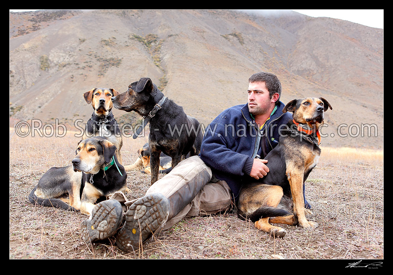Image of Cory Hollister with his cattle working dogs taking a break on the Autumn cattle muster over the Robinson Saddle, near Lake McRae, Molesworth Station, Marlborough District, Marlborough Region, New Zealand (NZ) stock photo image