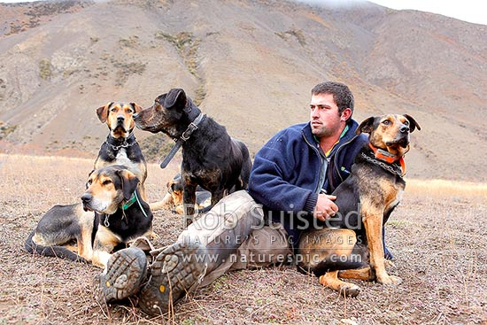 Cory Hollister with his cattle working dogs taking a break on the Autumn cattle muster over the Robinson Saddle, near Lake McRae, Molesworth Station, Marlborough District, Marlborough Region, New Zealand (NZ) stock photo.