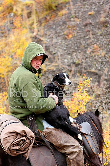 Tom O'Sullivan, Molesworth stockman, taking a break with one of his heading dogs while on horseback, Robinson Creek, Molesworth Station, Marlborough District, Marlborough Region, New Zealand (NZ) stock photo.