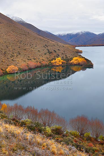 Lake McRae in Autumn colours. Looking up the Tweed River valley towards Carters Saddle (right), Molesworth Station, Marlborough District, Marlborough Region, New Zealand (NZ) stock photo.