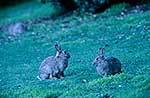 Rabbits on grass