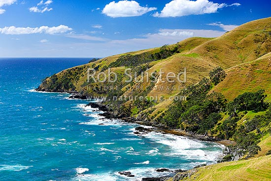 Coromandel north coastline near Port Jackson with pohutukawa trees and farmland adjoining the beach, Cape Colville, Coromandel Peninsula, Thames-Coromandel District, Waikato Region, New Zealand (NZ) stock photo.