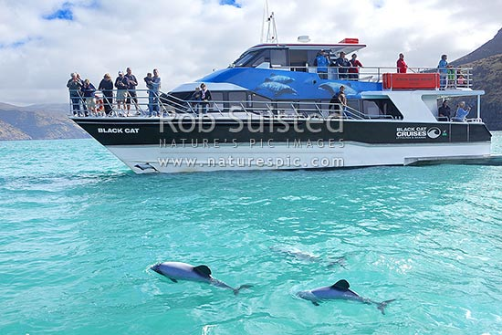 Black Cat Cruises Akaroa Harbour