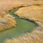 Tidal stream and salt marsh rushes