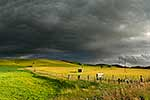 Moody farmland, Central Hawkes Bay