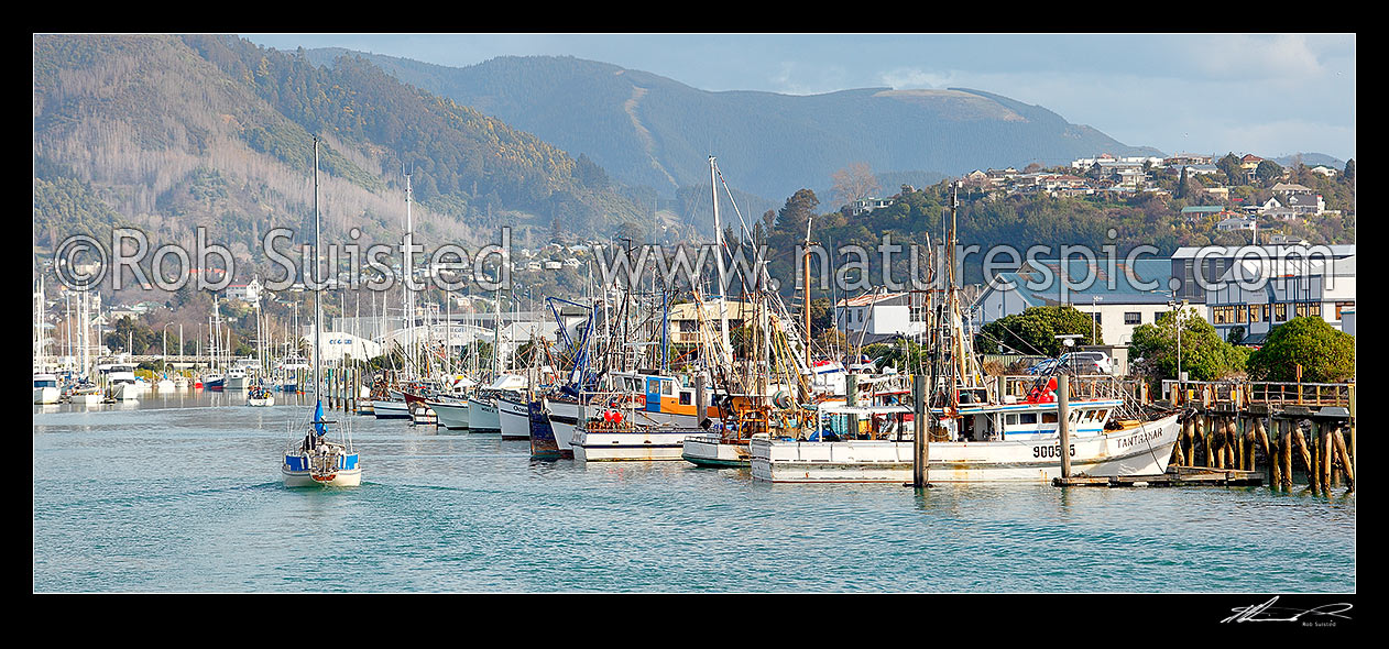 Image of Port Nelson with commercial wharf and boat marina, with yacht entering harbour. Panorama, Nelson, Nelson City District, Nelson Region, New Zealand (NZ) stock photo image