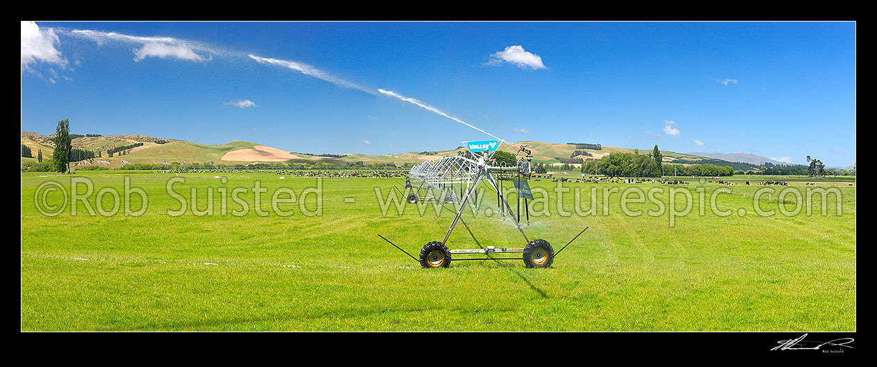 Image of Pivot irrigator watering dairy pasture on the Amuri Plain, with dairy cows grazing behind. Panorama, Culverden, Hurunui District, Canterbury Region, New Zealand (NZ) stock photo image