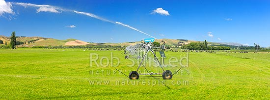 Pivot irrigator watering dairy pasture on the Amuri Plain, with dairy cows grazing behind. Panorama, Culverden, Hurunui District, Canterbury Region, New Zealand (NZ) stock photo.