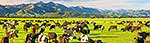 North Canterbury dairy farming