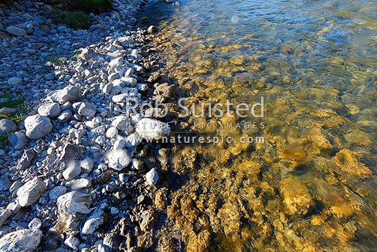 Didymo, and invasive species, infestation in upper Hurunui River. Didymosphenia geminata, a diatom also as rock snot, discovered in NZ 2004, Lake Sumner, Hurunui District, Canterbury Region, New Zealand (NZ) stock photo.