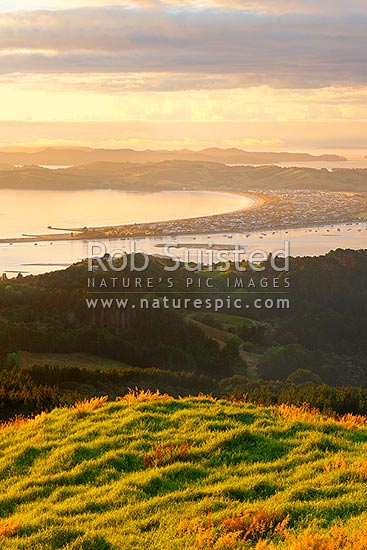 Omaha Beach, Little Omaha Bay and Whangateau Harbour with Tawharanui Peninsula, Hauraki Gulf and Kawau Island beyond, at dawn, Leigh, Rodney District, Auckland Region, New Zealand (NZ) stock photo.
