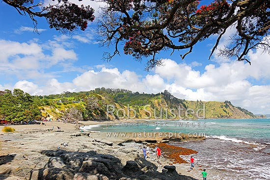 Goat Island (Cape Rodney-Okakari Point) Marine Reserve and beach with summer visitors, Leigh, Rodney District, Auckland Region, New Zealand (NZ) stock photo.