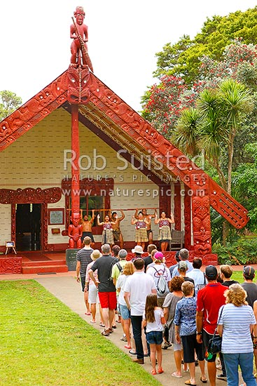 Visitor to Te Whare Runanga, showing traditional Maori carving detail at the Waitangi Treaty Grounds Te Tiriti o Waitangi. Panorama, Paihia, Bay of Islands, Far North District, Northland Region, New Zealand (NZ) stock photo.