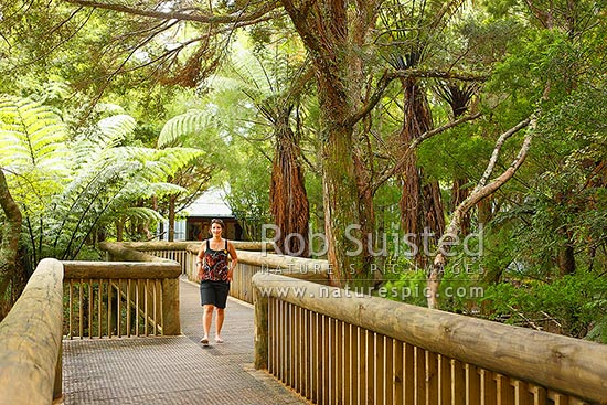 Waitangi Treaty Grounds forest walway entrance through native forest, Paihia, Bay of Islands, Far North District, Northland Region, New Zealand (NZ) stock photo.