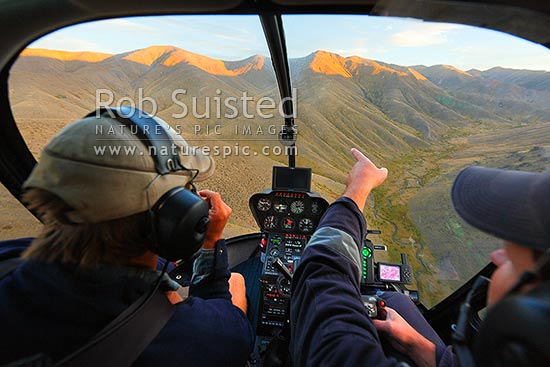 Helicopter flight to pinpoint cattle for mustering in the Yarra River headwaters. Stockman Andy McLachlan and pilot Phil Packham, Molesworth Station, Marlborough District, Marlborough Region, New Zealand (NZ) stock photo.