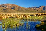 Lake Sedgemere wetlands Molesworth