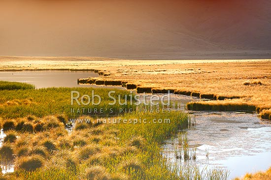 Lake Sedgemere wetland on beautiful golden morning near Tarndale, Molesworth Station, Marlborough District, Marlborough Region, New Zealand (NZ) stock photo.