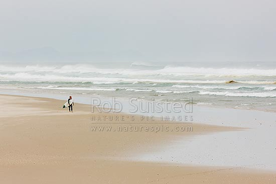 Surfer carrying surfboard on Pakiri Beach during a good ocean swell and surf, Pakiri Beach, Rodney District, Auckland Region, New Zealand (NZ) stock photo.