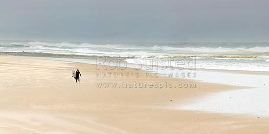 Lone surfer carrying surfboard on Pakiri Beach during a good ocean swell and surf. Panorama, Pakiri Beach, Rodney District, Auckland Region, New Zealand (NZ) stock photo.