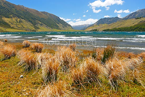 Lake Taylor. Lake Sumner Forest Park. The Nelson Tops and Southern Alps in distance, Lake Sumner, Hurunui District, Canterbury Region, New Zealand (NZ) stock photo.