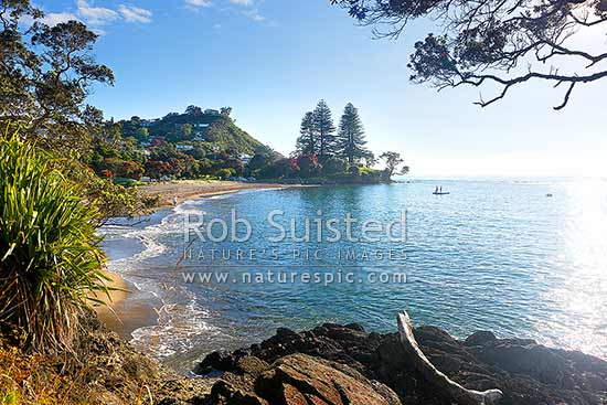 Matheson Bay on a summer morning, Leigh, Rodney District, Auckland Region, New Zealand (NZ) stock photo.