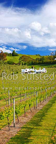 Coleraine House or 'Buck House' landmark amongst vineyards of Te Mata Estate. House designed by Ian Athfield & built 1980. Vertical panorama, Havelock North, Hastings District, Hawke's Bay Region, New Zealand (NZ) stock photo.