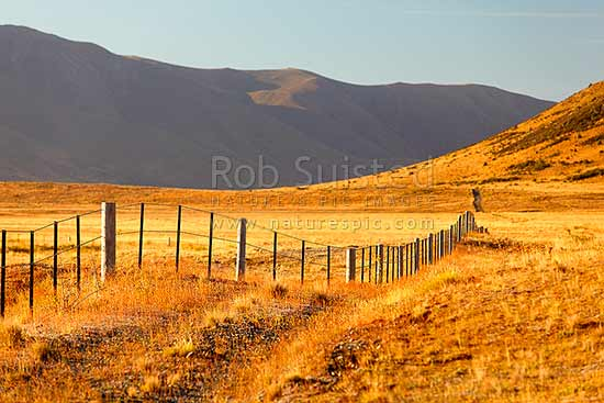 Fenceline at dawn near Lake Sedgemere, Tarndale, Molesworth Station, Marlborough District, Marlborough Region, New Zealand (NZ) stock photo.