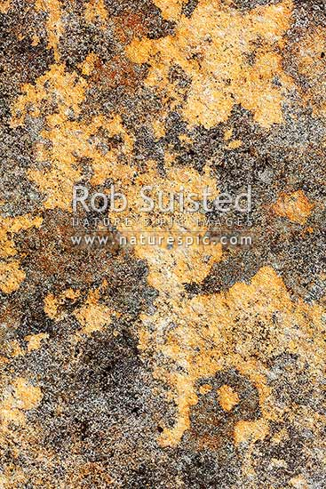 Rock and lichen detail on Paparoa Ranges alpine tops, Paparoa National Park, Grey District, West Coast Region, New Zealand (NZ) stock photo.