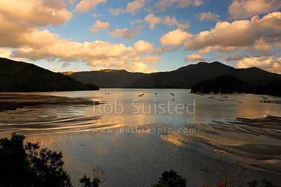 Ngakuta Bay sunrise over moored yachts and boats in Grove Arm of Queen Charlotte Sound, Marlborough Sounds, Marlborough District, Marlborough Region, New Zealand (NZ) stock photo.